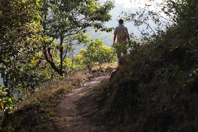 vivanta-by-taj-coorg-rain-forest-walk