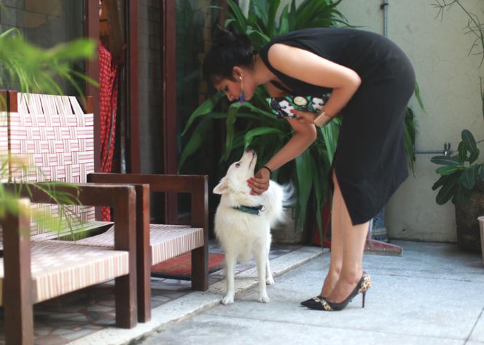 fashion-dog
