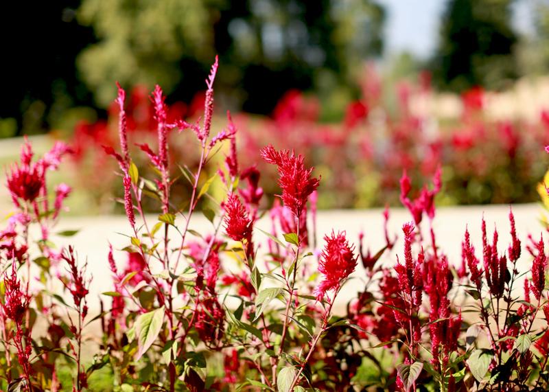 nishat garden srinagar