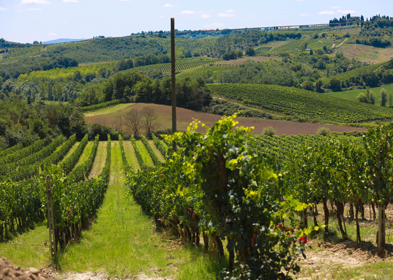 chianti-vineyards-wine-travel