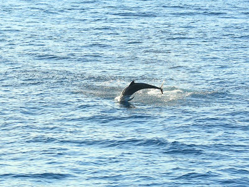 bend it like dolphin! : D