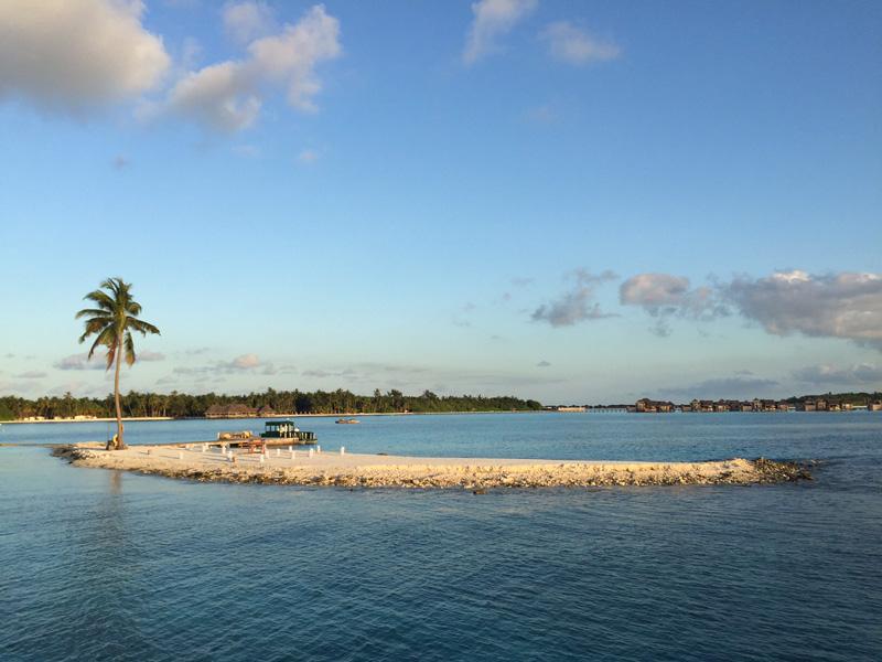 one palm island!