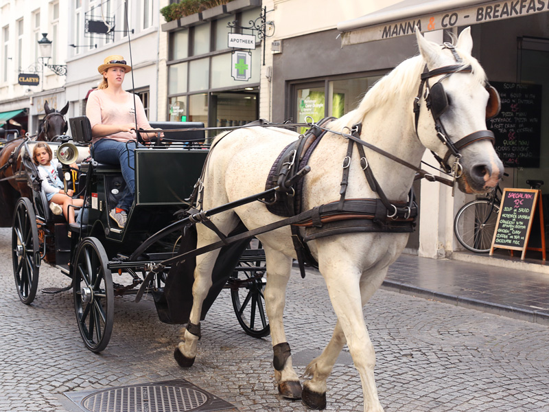 you gotta see brugge on buggy. they take you to the hidden gems of the town