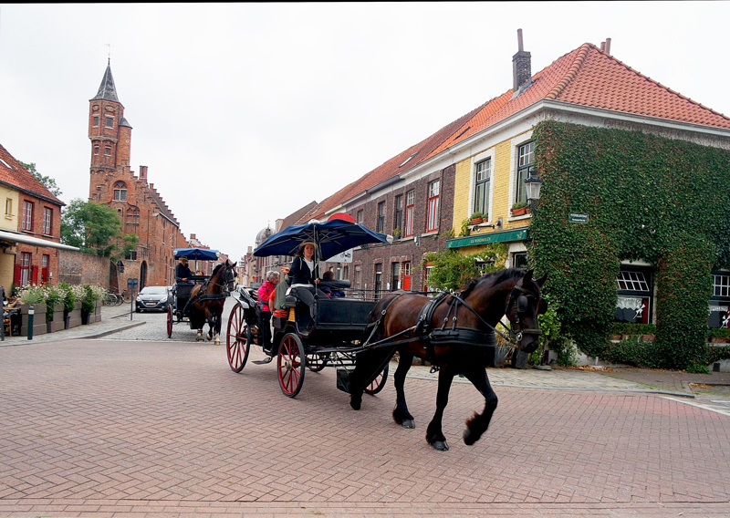 the very royal buggy rides that take you through out the city