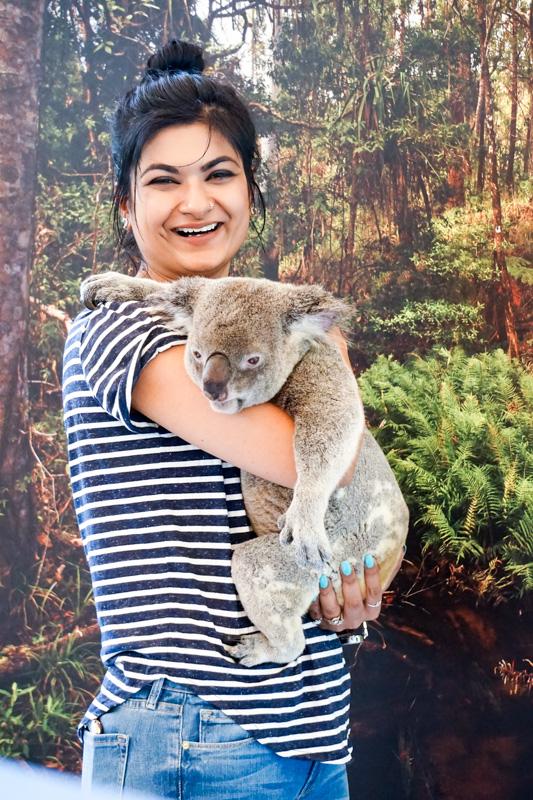 koala-hug-australia